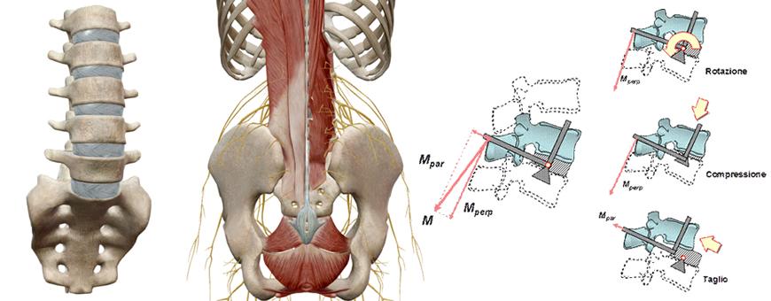 rachide e forze sulla colonna vertebrale