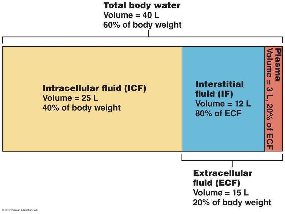 Acqua intracellulare extracellulare