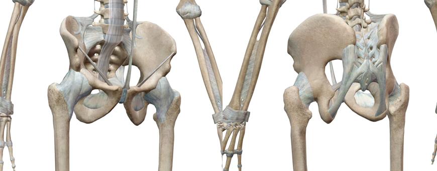 bacino ed osso sacro