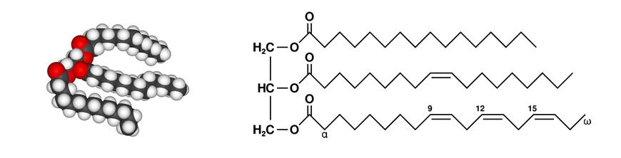 lipidi chimica degli alimenti