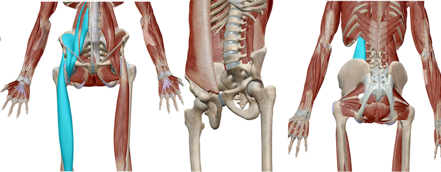 muscoli antiversore dell'anca