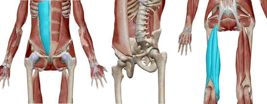 muscoli retroversori dell'anca