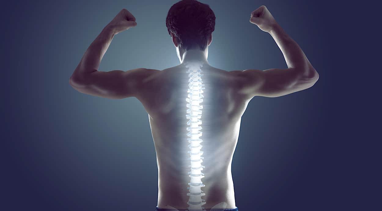 colonna vertebrale anatomia e funzioni