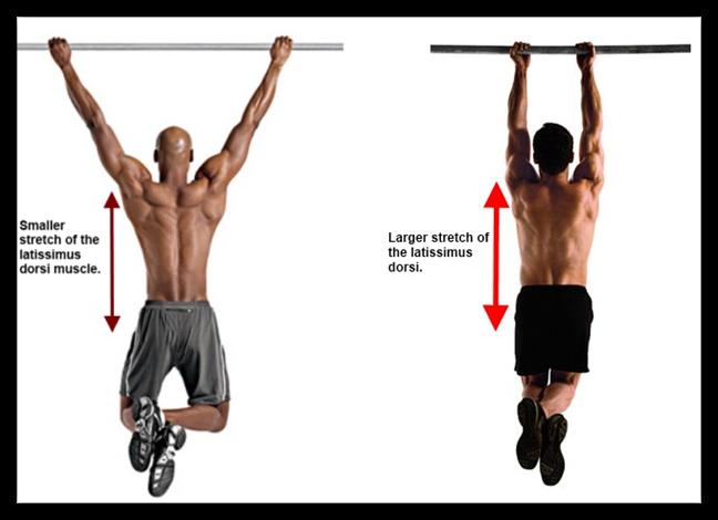 trazioni e muscoli