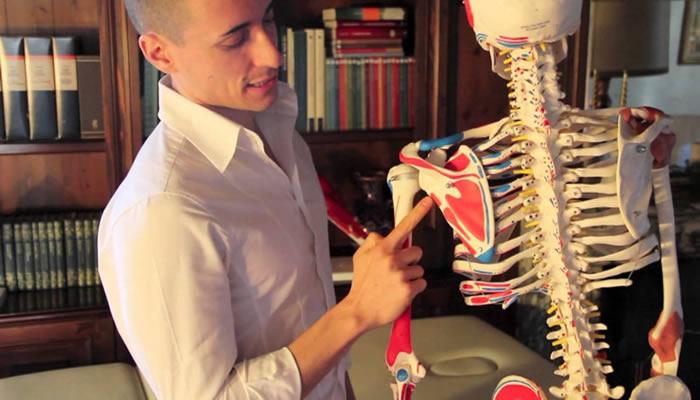 I muscoli principali del braccio
