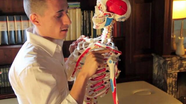 I muscoli superiori del tronco