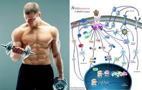 Hormone hypothesis