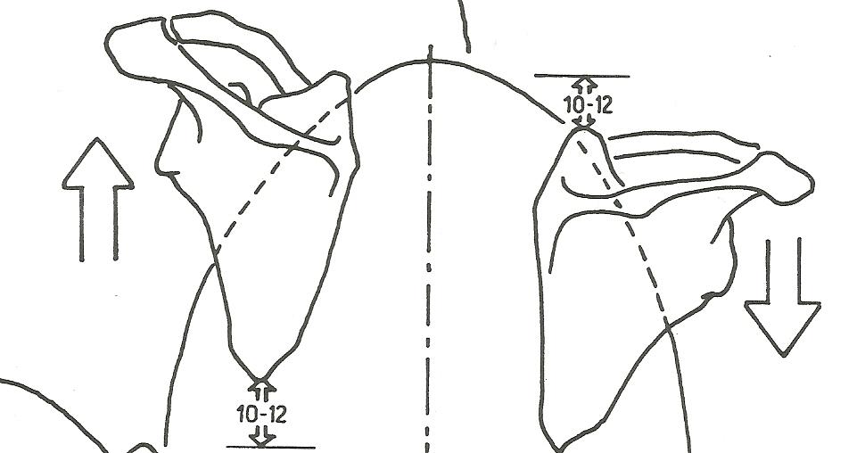 rotazione scapola