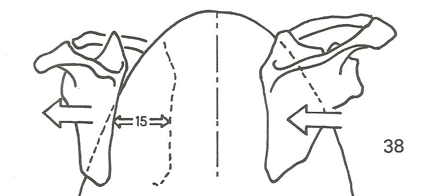 adduzione abduzione scapola