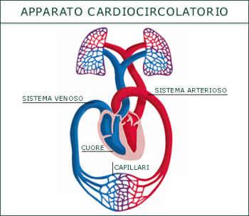 cardiocircolatorio