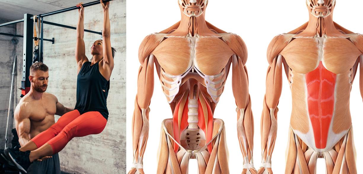 muscoli coinvolti leg raises