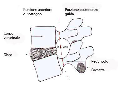 pilastri colonna vertebrale