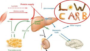 Chetosi fisiologica