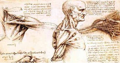 Anatomia spalla
