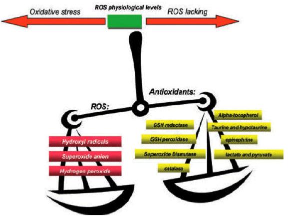 Bilancio stress ossidativo e antiossidanti