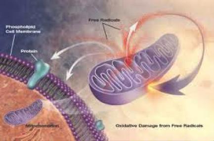Mitocondri e stress ossidativo