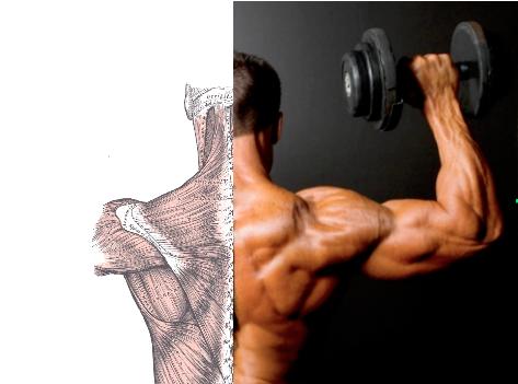 spalla esercizi, dolore e biomeccanica