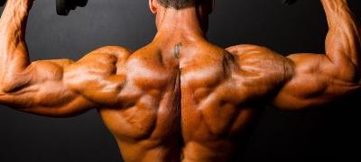 Aree ipertrofia muscolare