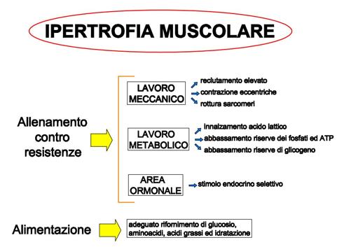 dieta massa muscolare pdf