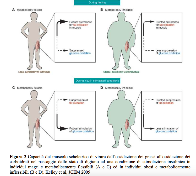 Flessibilità metabolica e resistenza all'insulina