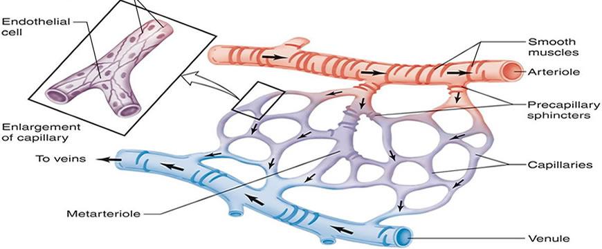 microcircolo
