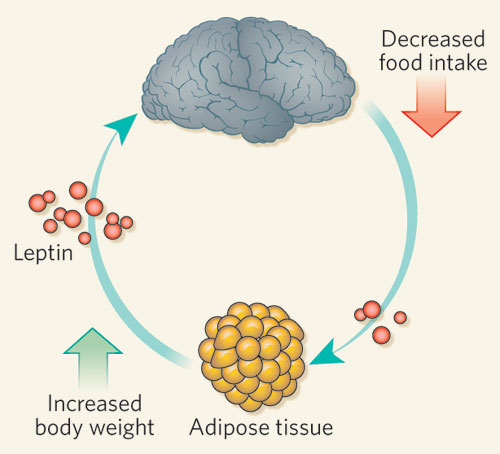 Metabolismo bloccato