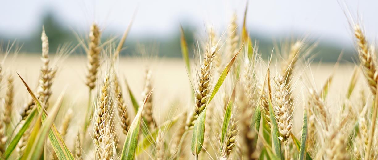 biodisponibilità cereali integrali