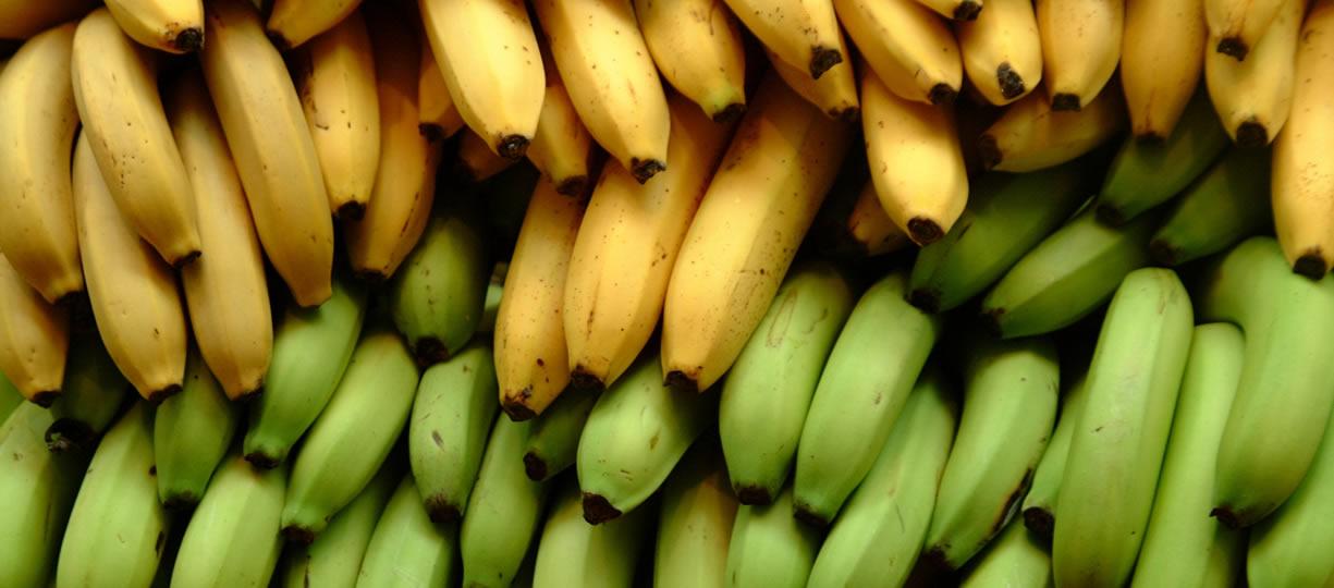 amido resistente banana