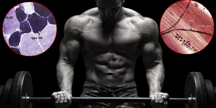 Allenamento metabolico nel bodybuilding