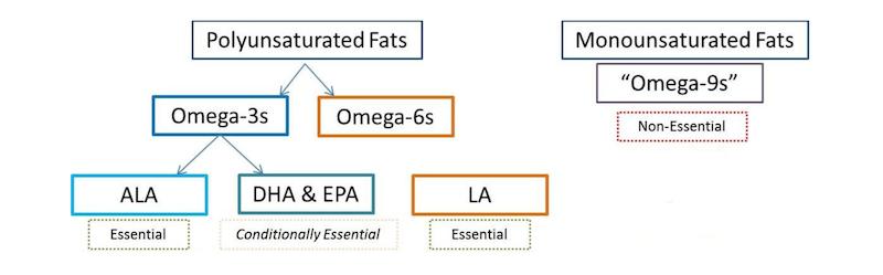 Omega 3 e 6
