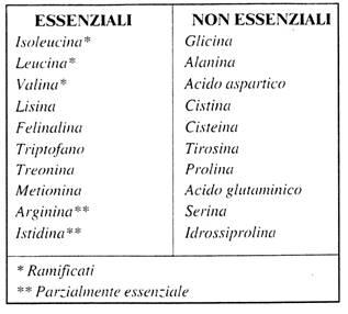 Aminoacidi essenziali e non essenziali