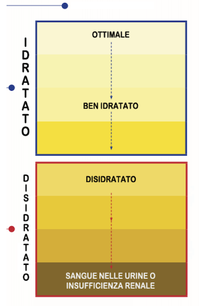 Idratazione e colore urine