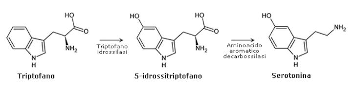 trasformazione triptofano serotonina