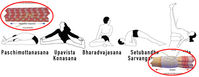 Punti fondamentali nello stretching