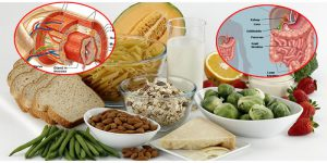 Fibre alimentari cosa devi sapere