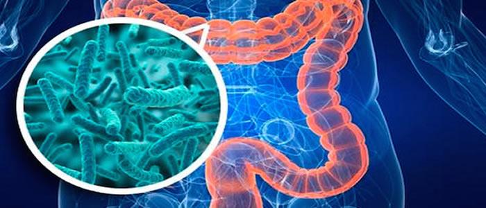 Prebiotici e fibra alimentare