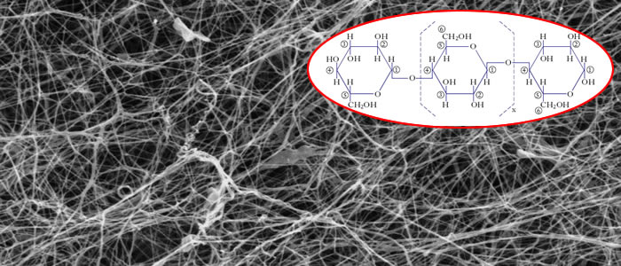 Struttura fibra cellulosa