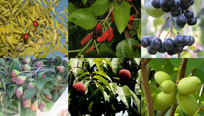 frutta-antica