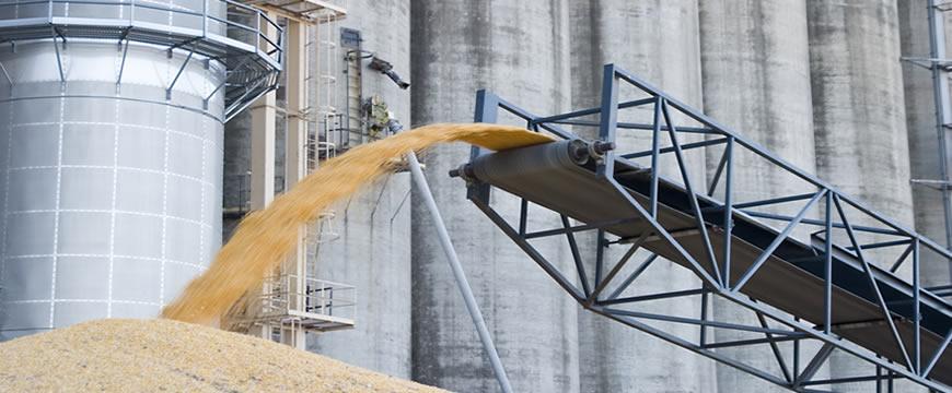 industria granoturco