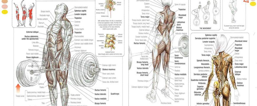 forza bodybuilding