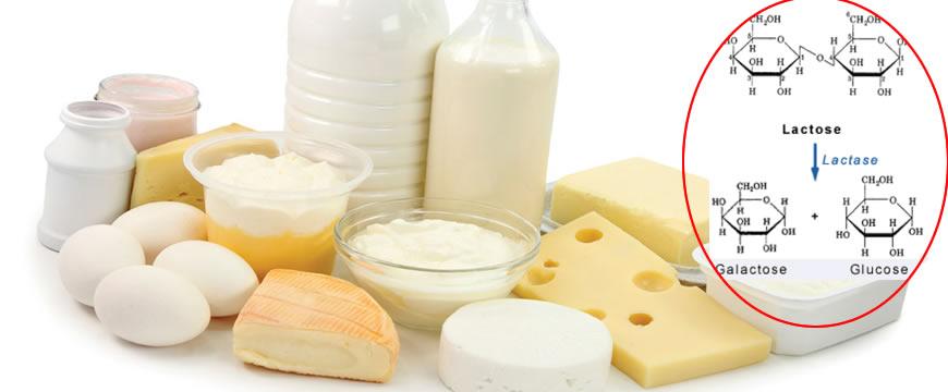 latte e lattosio
