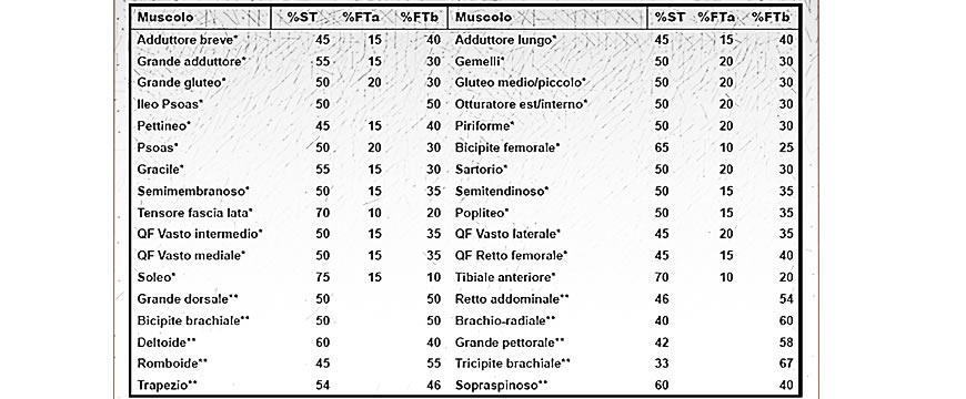 muscolo tipologia di fibre