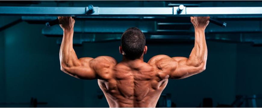 allenamento muscoli schiena