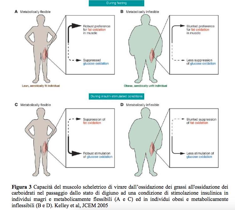 flessibilità metabolica come funziona
