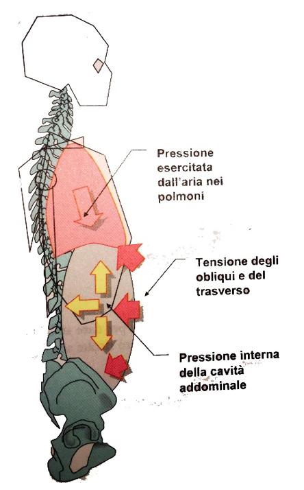 Pressione addominale