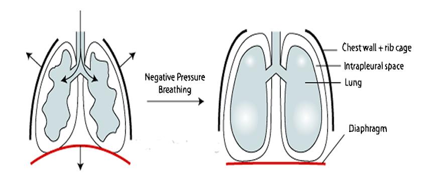 pressione diaframmatica polmoni