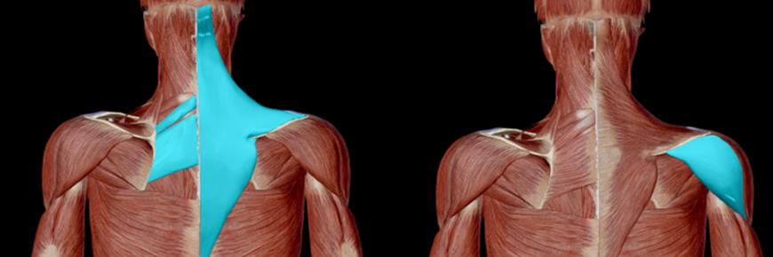 Lat machine muscoli
