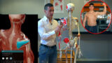 Extrarotatori: muscoli, esercizi ed altro ancora