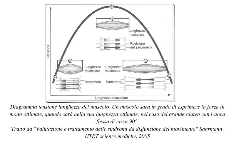Diagramma-forza-lunghezza-muscolo