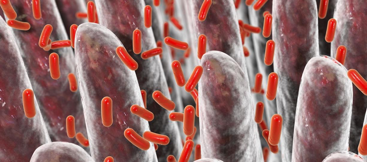villi intestinali e microbioma